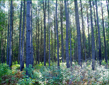 Morrison Forestry & Real Estate Company
